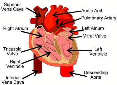 heart2aerfetgegtr.jpg